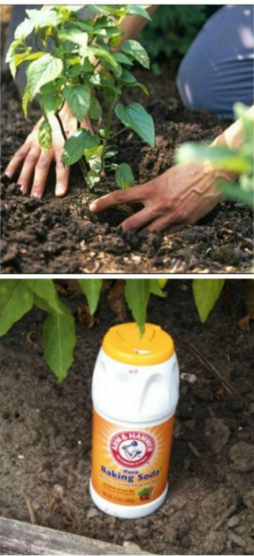 23 garden tips hacks ideas
