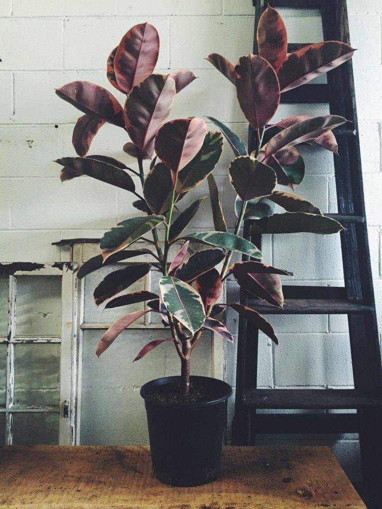 12 plants Interieur fleurs ideas