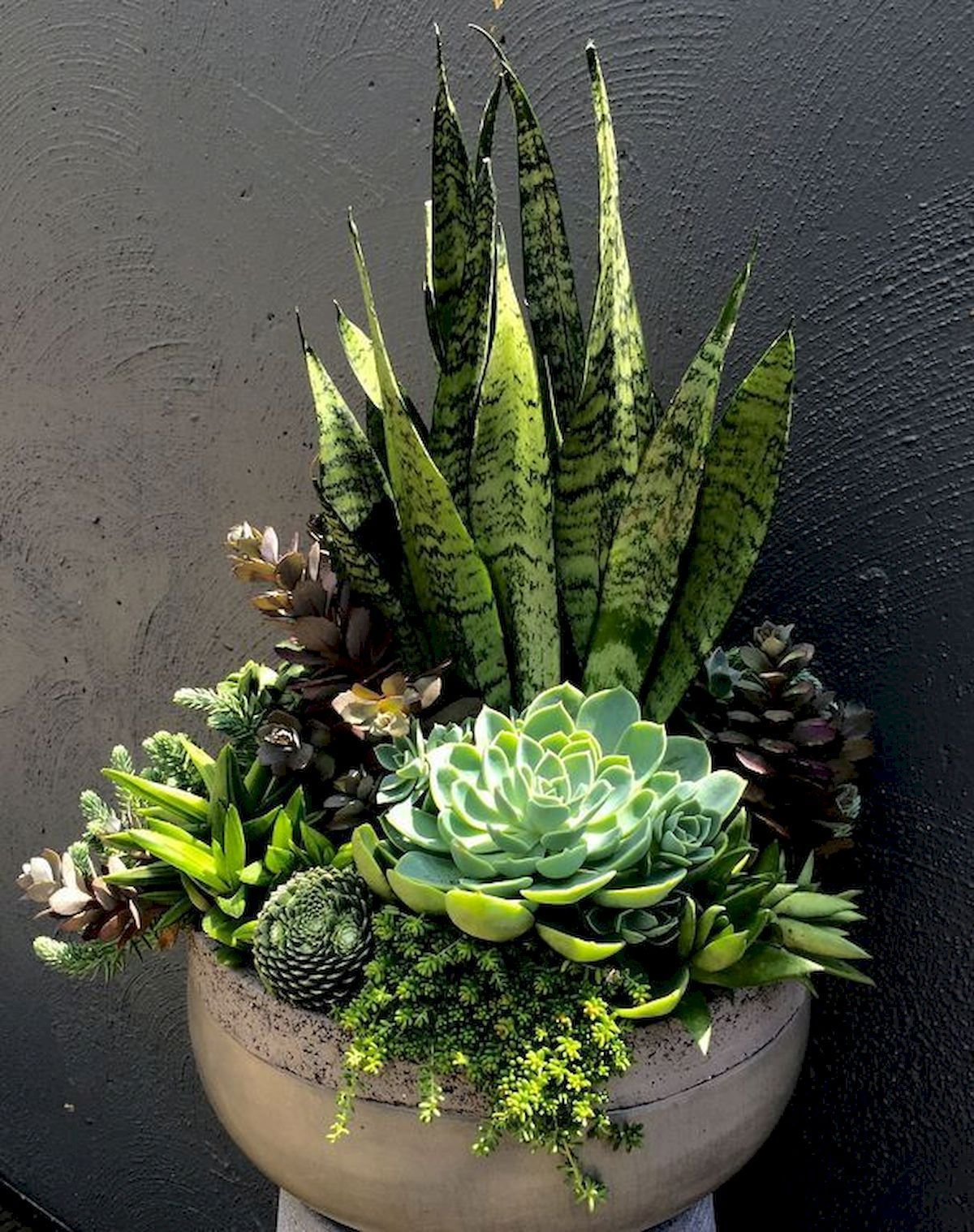 14 planting Room succulents ideas