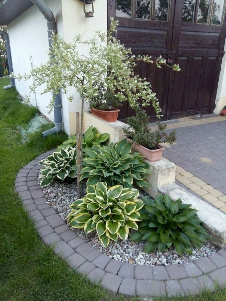 16 plants Decoration front yards ideas