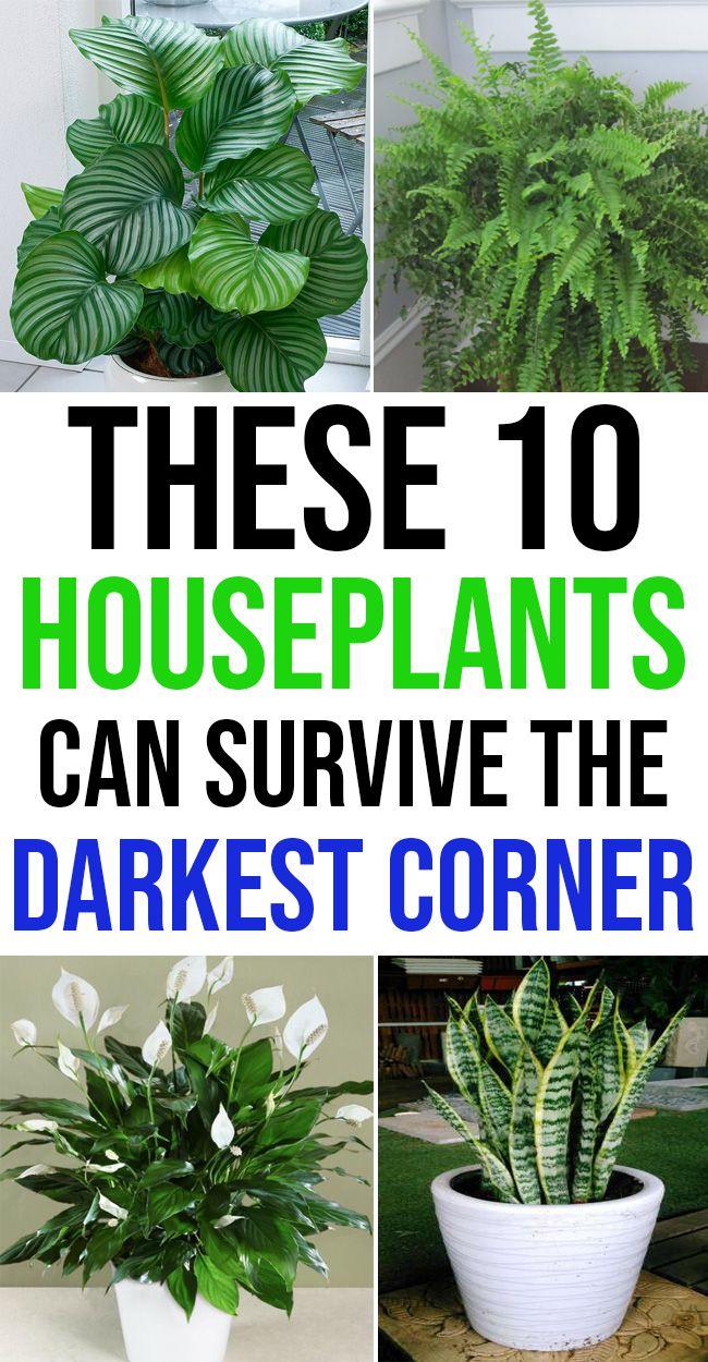 10 Houseplants That Can Survive Darkest Corner of Your House -   11 plants Decor corner ideas