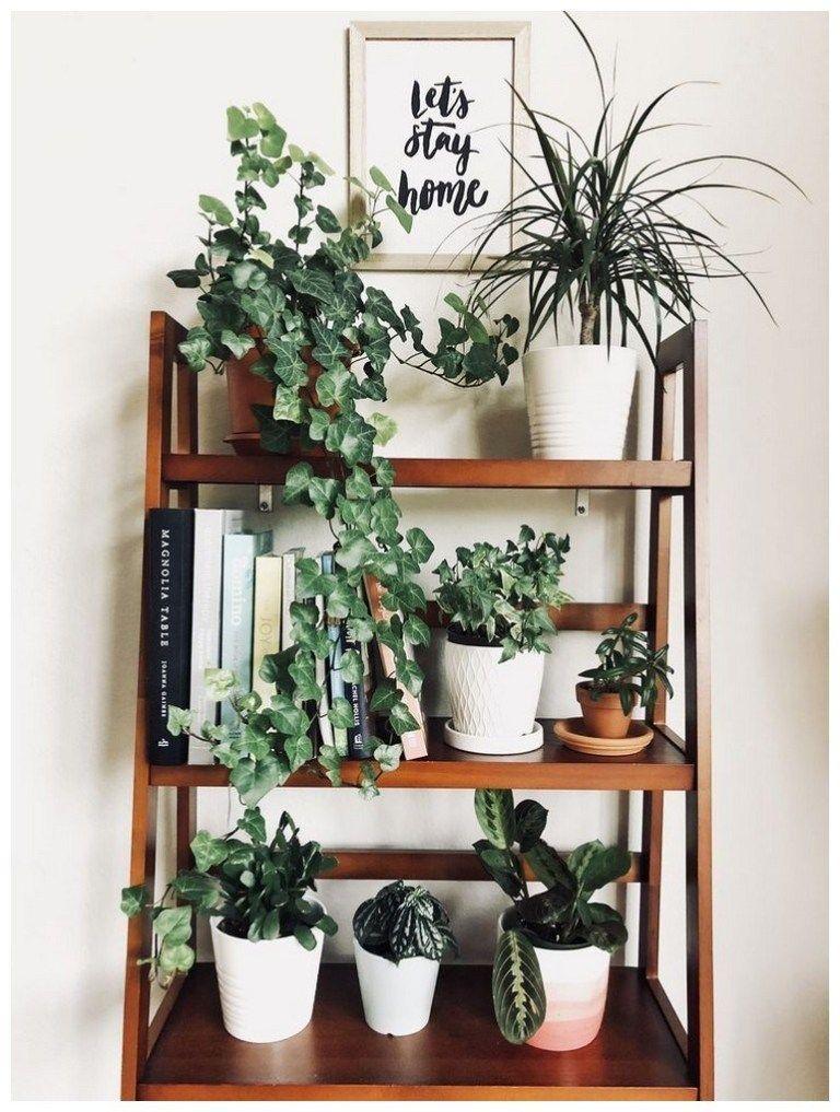Fragrant plants that repel mosquitoes -   11 plants Decor corner ideas