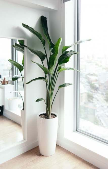 New home office corner plants ideas -   11 plants Decor corner ideas