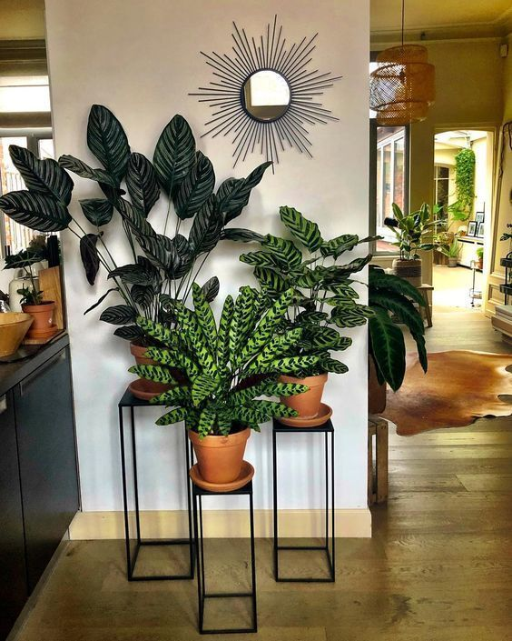 30+ Indoor Decorative Plants To Bring Freshness -   11 plants Decor corner ideas