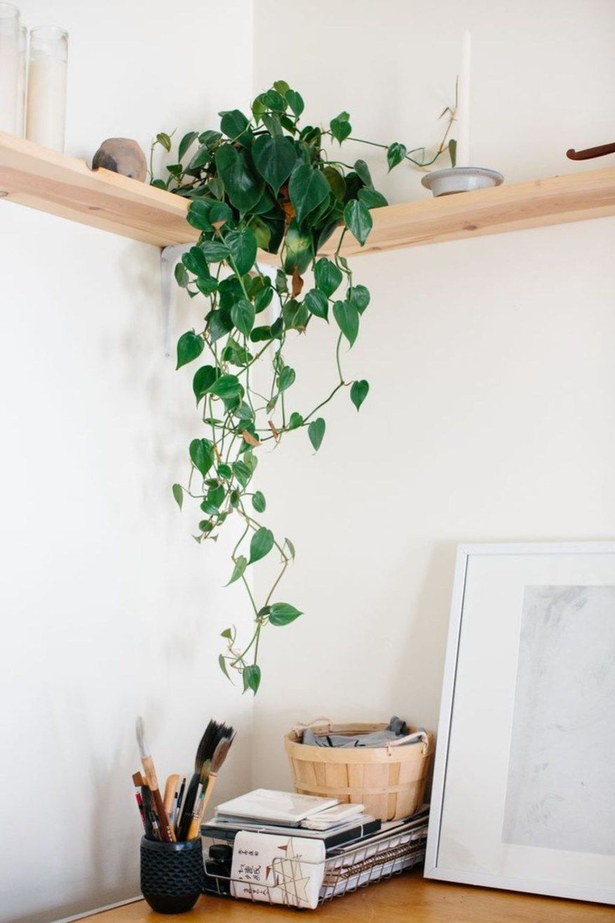 40 Awesome Indoor Plants Decor Ideas For Your Home And Apartment -   11 plants Decor corner ideas