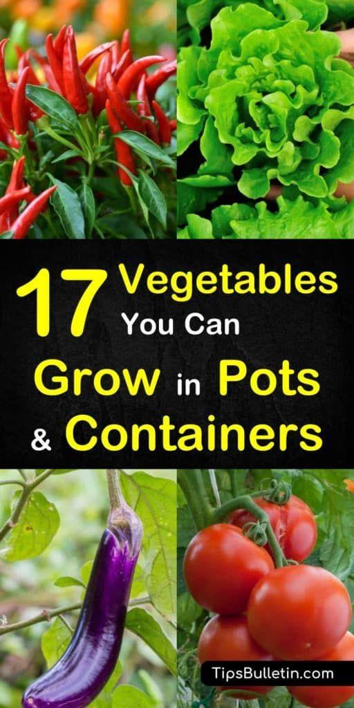 18 plants Vegetables veggies ideas