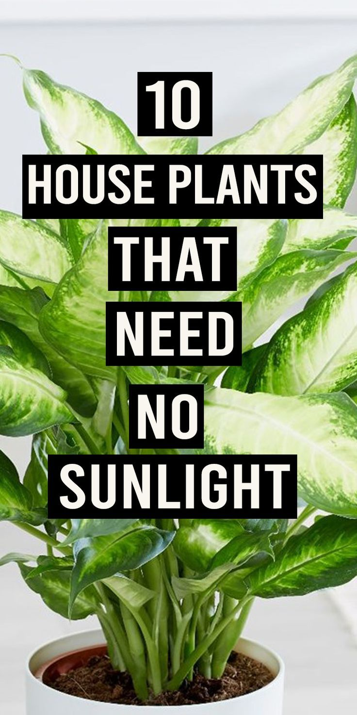 9 plants Room sunlight ideas