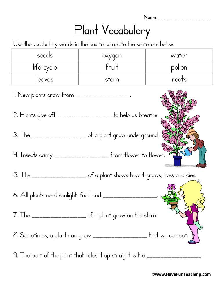 Plant Vocabulary Worksheet | Have Fun Teaching -   16 plants Teaching kids ideas