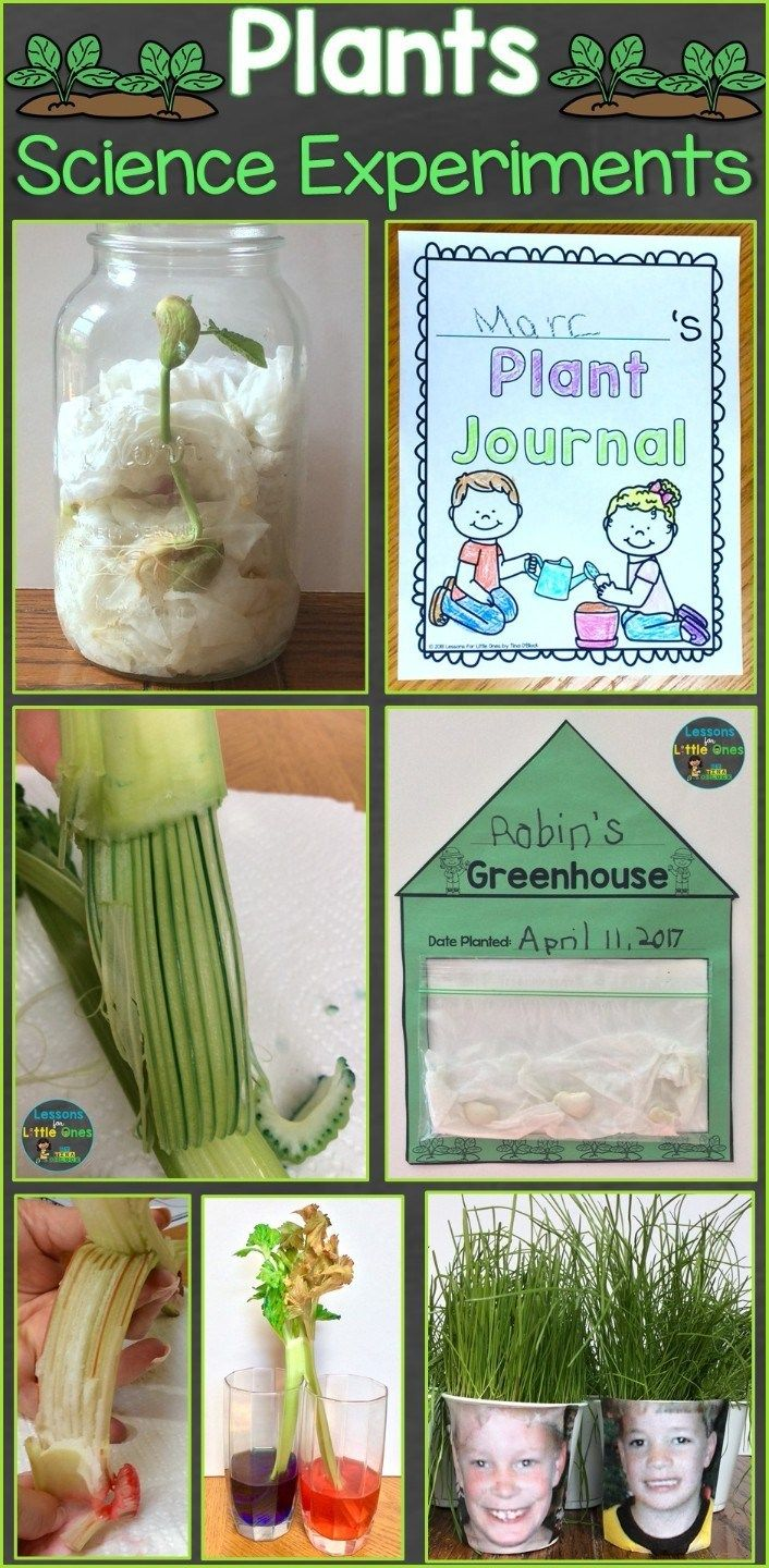 Plants Science Experiments & Teaching How Plants Grow - Lessons for Little Ones by Tina O'Block -   16 plants Teaching kids ideas