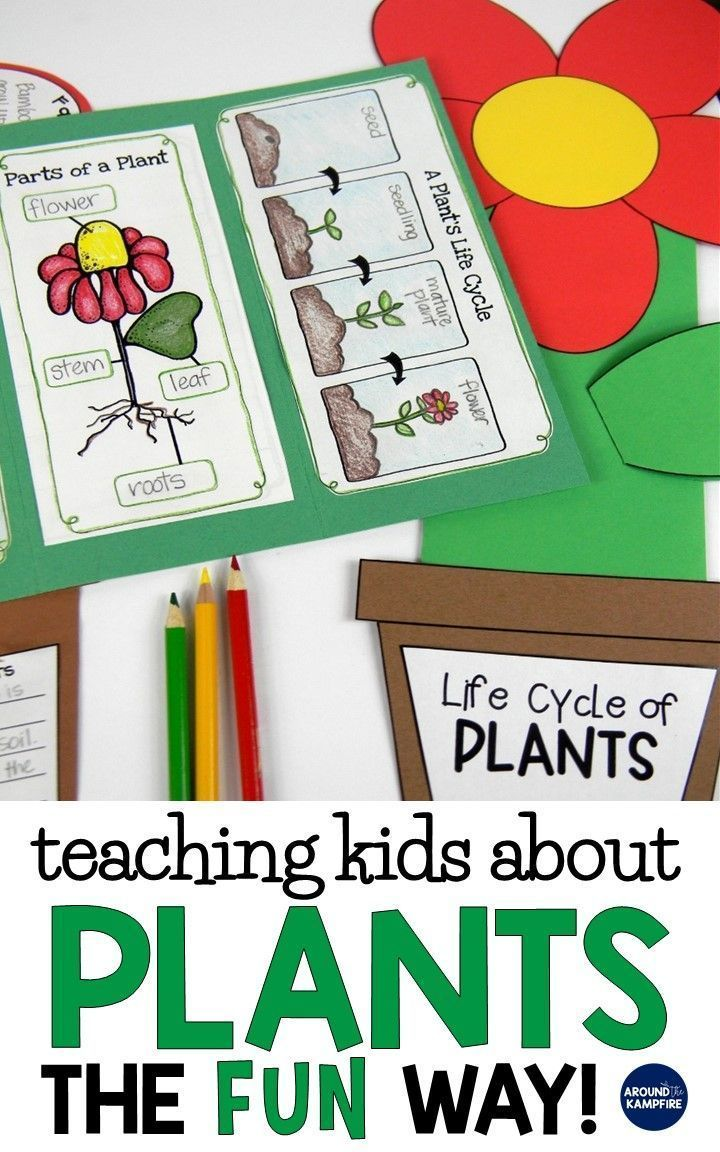 Plant Life Cycle Activities-Fun, Hands-on Science for Kids - Around the Kampfire -   16 plants Teaching kids ideas